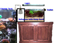 Refugium or mud filter with plants for marine aquariums