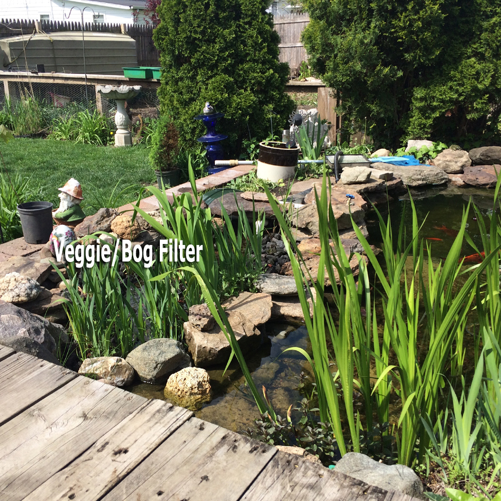 Pond care information clear garden ponds filtration for Water filtering plants for ponds