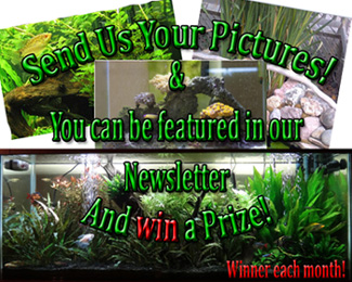 Send your pictures by clicking this photo or sending to info@americanaquariumproduct.com