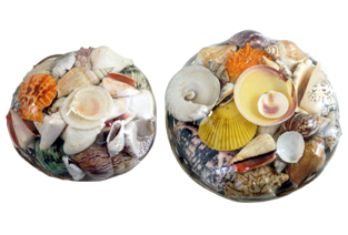 SeaShell Gift Baskets