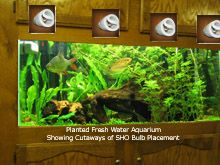 Planted Freshwater Aquarium showing approximate SHO bulb placement