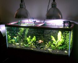 Aquarium SHO Power Compact Bulbs, Lights, New Planted Aquarium Setup