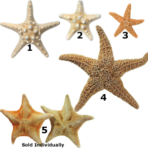 Suger, Bat and African Decorative Starfish