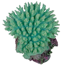 Table Coral, Light Green, Acropora Hyacinthus, Synthetic Decoral Replica