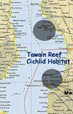 Map of Taiwan Reef Cichlid Habitat