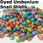 UNIQUE DYED UMBONIUM SHELLS;