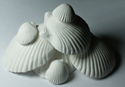 Wonder Shell for aquarium chemistry mineral cations