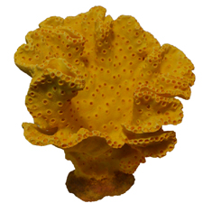 DeCoral Synthetic Coral, Yellow Leather