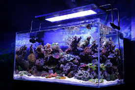 ZetLight, Maxspect Razor Aquarium LED over marine reef tank